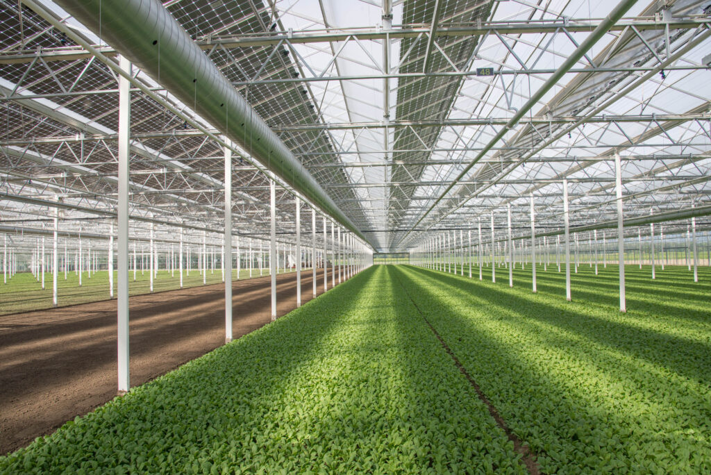 Agrivoltaics: Enough sunlight for electricity and crops